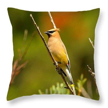 Fishercap Cedar Waxwing Throw Pillow by Adam Jewell