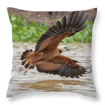 Fishing Hawk Throw Pillow by Wade Aiken