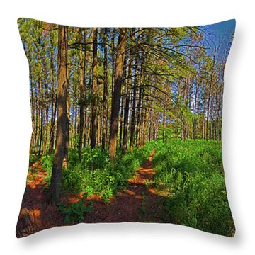 Paths, Pines 360 Throw Pillow