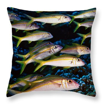 Fla-150811-nd800e-26035-color Throw Pillow