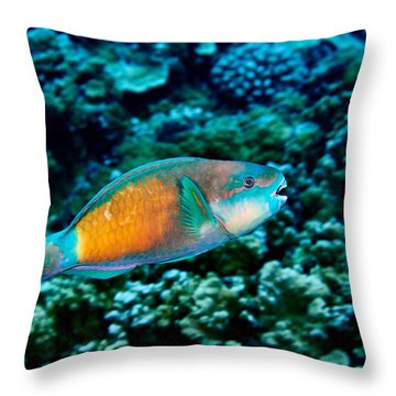 Fla-150811-nd800e-26049-color Throw Pillow