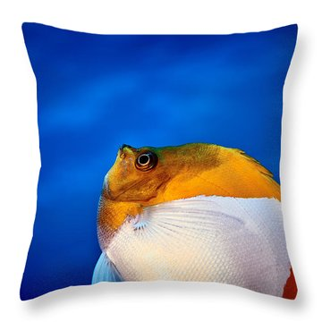 Fla-150811-nd800e-26086-color Throw Pillow