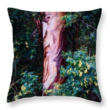 Fla-150523-nd800e-24853-color Throw Pillow