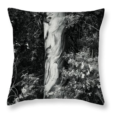 Fla-150523-nd800e-24853-bw-green Throw Pillow