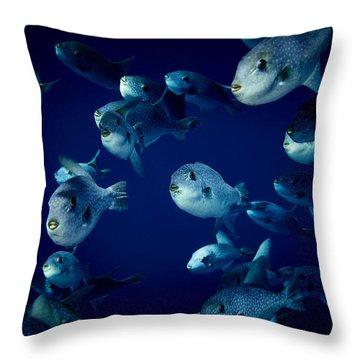 Fla-150811-nd800e-26096-color Throw Pillow by Fernando Lopez Arbarello