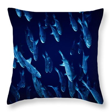 Fla-150811-nd800e-26105-color Throw Pillow