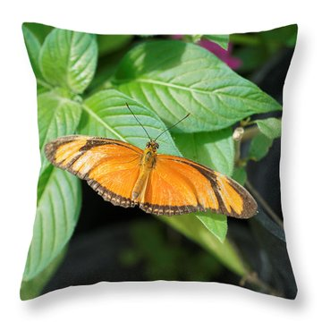 Throw Pillow featuring the photograph Flambeau Butterfly by Paul Gulliver