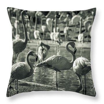 Flamboyance Of Flamingos Throw Pillow