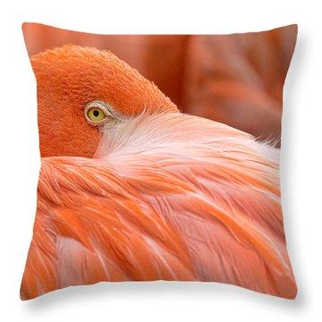 Flamboyant Flamingo Throw Pillow