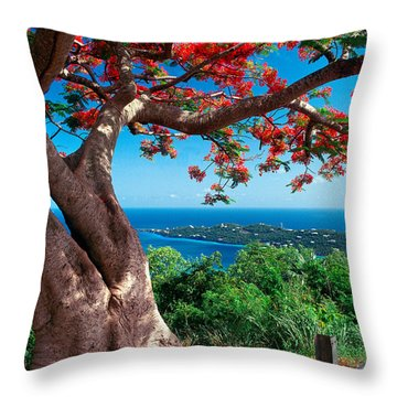 Flame Tree St Thomas Throw Pillow