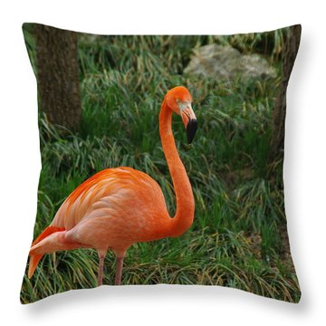 Flamingo 1 Throw Pillow by Robyn Stacey