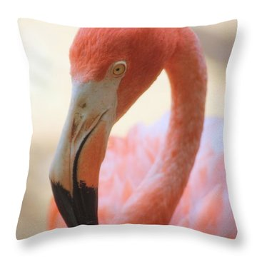 Throw Pillow featuring the photograph Flamingo 2 by Elizabeth Budd