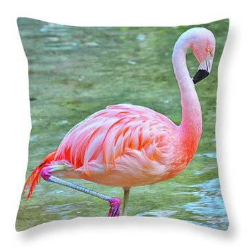 Flamingo 39 Throw Pillow