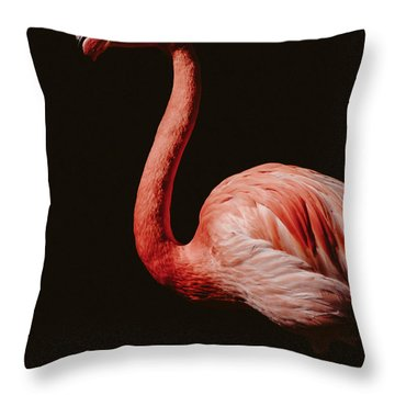 Throw Pillow featuring the photograph Flamingo 7 by Andrea Anderegg