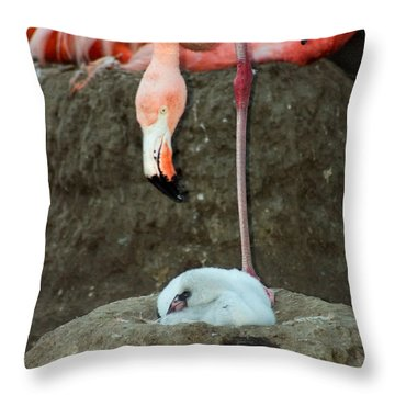 Flamingo And Chick Throw Pillow by Anthony Jones