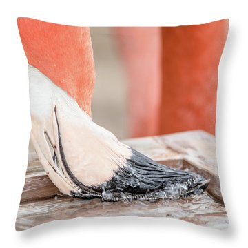 Flamingo At Sea World In Orlando Florida Throw Pillow by Peter Ciro