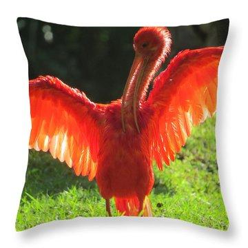 Flamingo Backlit Throw Pillow