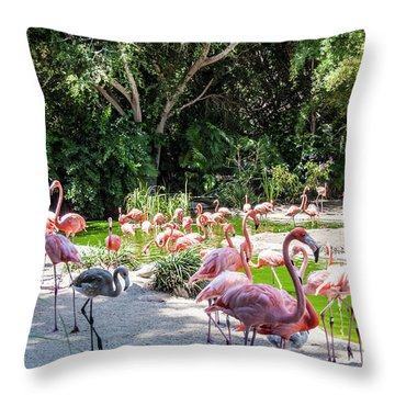 Flamingo Flock Throw Pillow by Daniel Hebard
