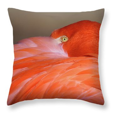 Throw Pillow featuring the photograph Flamingo by Michael Hubley