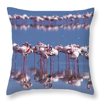 Flamingo Reflection - Lake Nakuru Throw Pillow by Sandra Bronstein