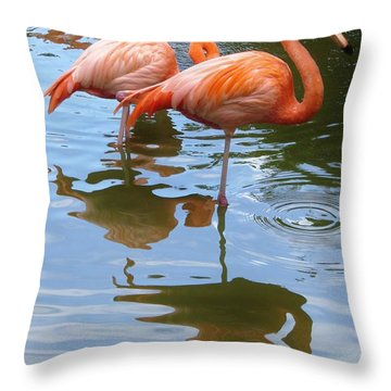 Throw Pillow featuring the photograph Flamingo Reflections by Margaret Bobb