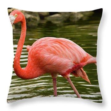 Flamingo Wades Throw Pillow