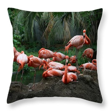 Throw Pillow featuring the photograph Flamingos by Cathy Harper