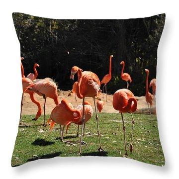 Throw Pillow featuring the photograph Flamingos by John Black