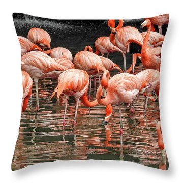 Throw Pillow featuring the photograph Flamingo Looking For Food by Pradeep Raja Prints