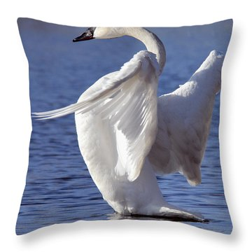 Flapping Swan Throw Pillow