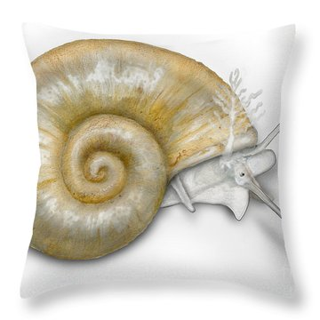 Throw Pillow featuring the painting Flat Valve Shell Valvata Cristata - Platte Pluimdrager - Flache  by Urft Valley Art