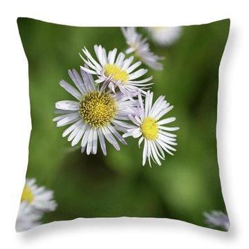 Fleabane, Erigeron Pulchellus - Throw Pillow