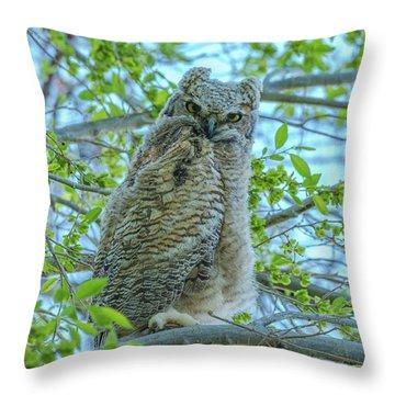 Fledgling Moment At Sundown Throw Pillow