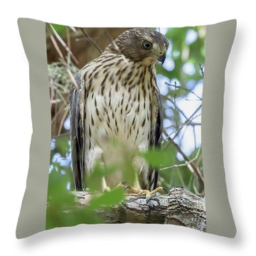 Fledgling Red-shouldered Hawk 2 Throw Pillow