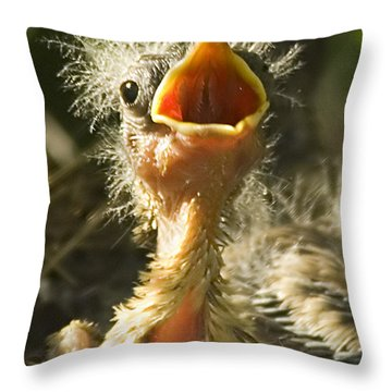 Fledgling Yellow Warbler Throw Pillow