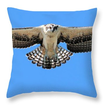 Throw Pillow featuring the photograph Flegeling Osprey by Debbie Stahre