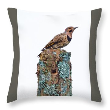 Flicker Perched On Tree Throw Pillow