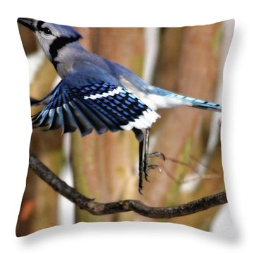 Flight Of The Blue Jay Throw Pillow