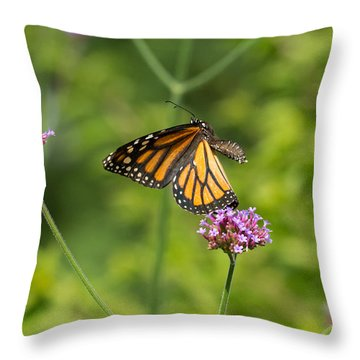 Flight Of The Monarch 1 Throw Pillow