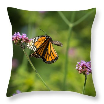 Flight Of The Monarch 2 Throw Pillow