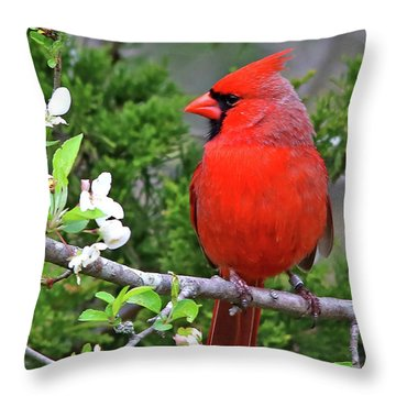 Flirty Red Throw Pillow by James F Towne