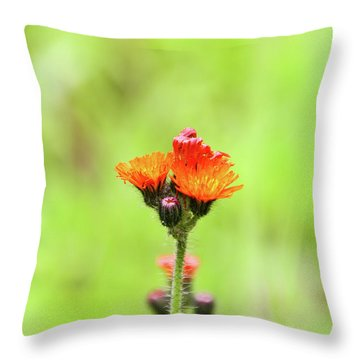 Fll-2 Throw Pillow