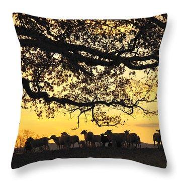 Flock At Sunrise Throw Pillow by Thomas R Fletcher
