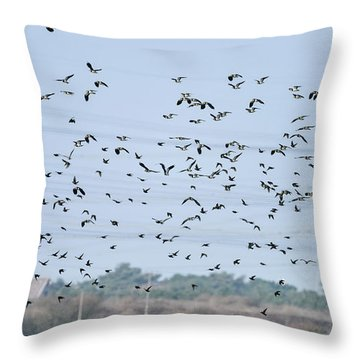 Flock Of Beautiful Migratory Lapwing Birds In Clear Winter Sky Throw Pillow by Matthew Gibson