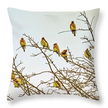 Flock Of Cedar Waxwings  Throw Pillow by Geraldine Scull
