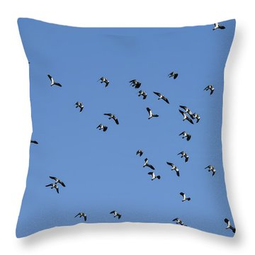 Flock Of Migratory Lapwing Birds In Clear Winter Sky Throw Pillow by Matthew Gibson