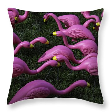 Flock Of  Plastic Flamingos Throw Pillow