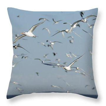 Flock Of Terns In Flight Throw Pillow