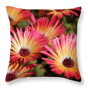Floral Expectancy Throw Pillow