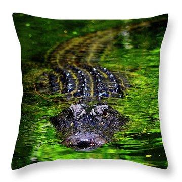 Florida Alligator Encounter Throw Pillow